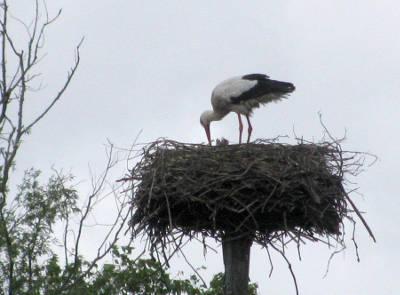 nest met jongen